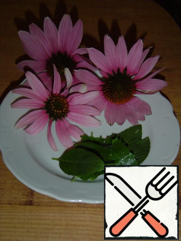Our mint and echinacea.