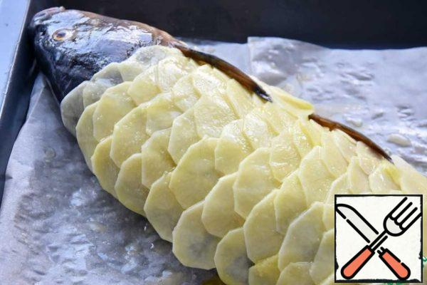 I transfer the fish to a baking sheet covered with parchment. With the skin side down. On the skinless side, I lay out potato slices, imitating the pattern of fish scales.