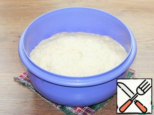Coming up the dough knead.